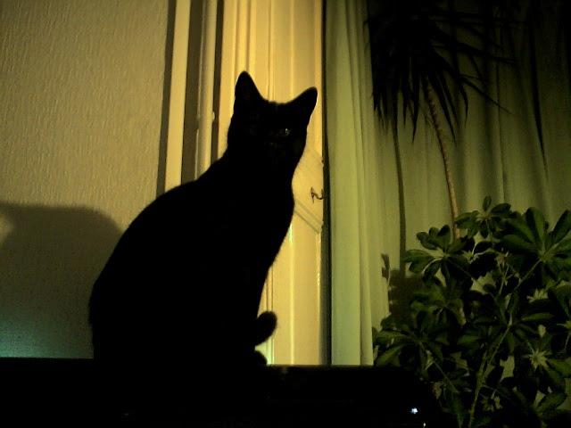 Cat in sillhouette